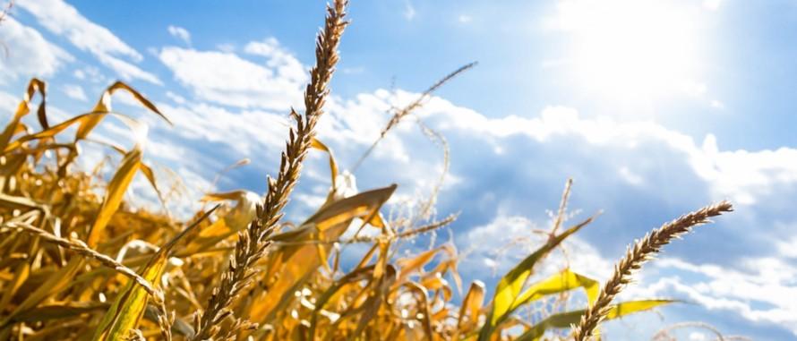 Dürrehilfe Landwirtschaft